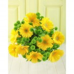 yellow gerbera with green buttons for philippines