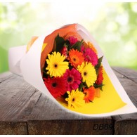 Lovely Gerbera Bouquet - One Dozen