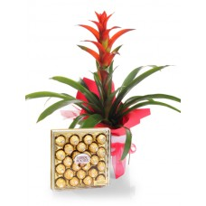 Bromeliad Plant with Ferrero Chocolate